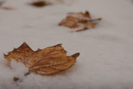天气冷怎么发朋友圈 今年的冬天特别冷的说说